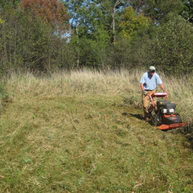Mowing reed canary grass with DR mower