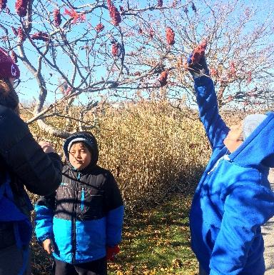 Finding Sumac in Belle Isle Marsh, Winter 2017